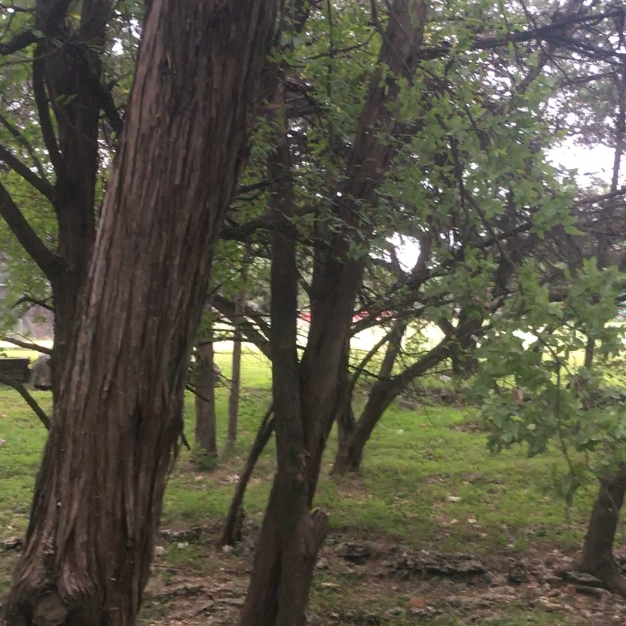 a small area of trees with lots of leaves. no deer can be seen.